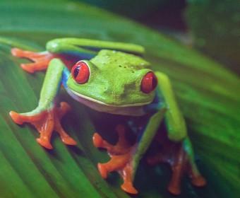 Frosch sitzt auf einem Blatt